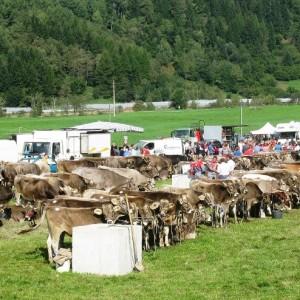 22-24 SETTEMBRE, CON LA FESTA DELL'AGRICOLTURA IN VAL DI PEIO GRANDE CONCLUSIONE DEL CHEESE FESTIVAL DI SOLE